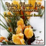 winter-interest-cover_small